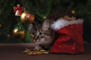 Kitten under Christmas tree